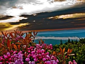 summer-sunrise-mountain-flowers
