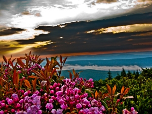 summer-sunrise-mountain-flowers